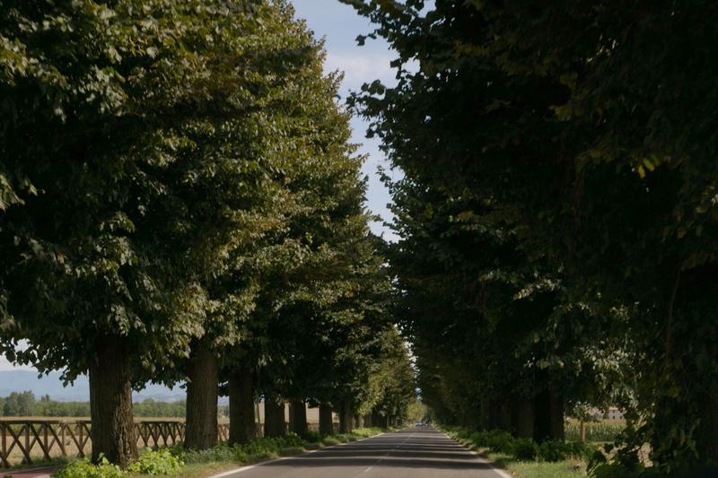 Attivit svolte dall 39 osservatorio del paesaggio per il - Alberi adatti per viali ...