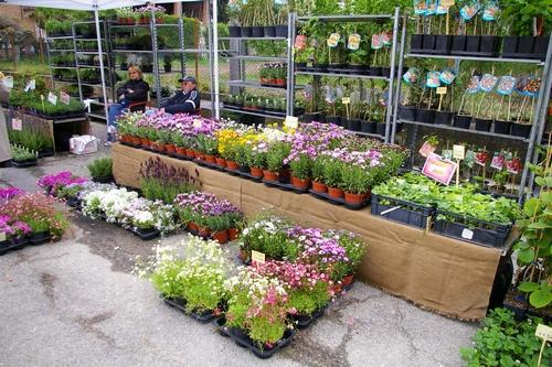 Esposizione piante e fiori ad isola d 39 asti 2008fiera for Piante e fiori
